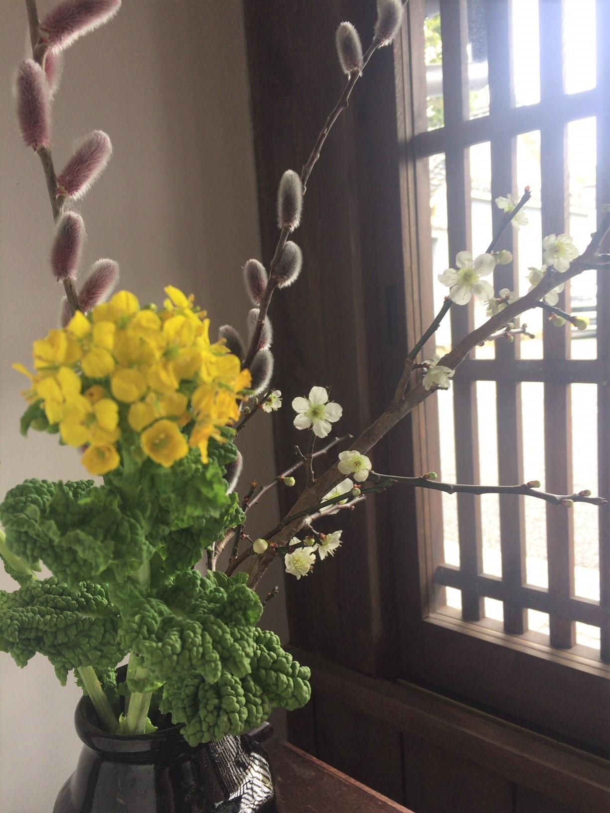 春らしく。