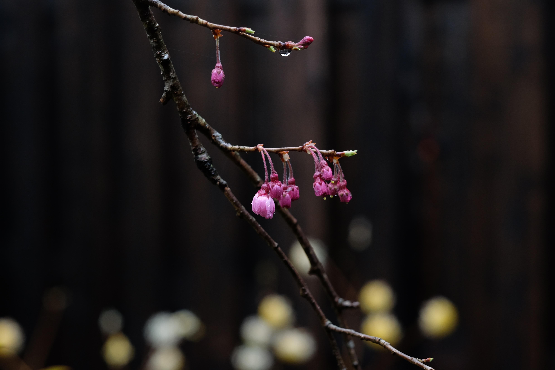 ひと雨ごとに…花ひらく